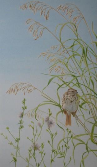 Song Sparrow (2008)