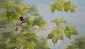 American Redstart (2008)
